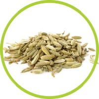fennel_seed_extract